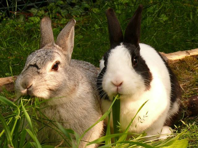 Hasenstall Kaninchenstall